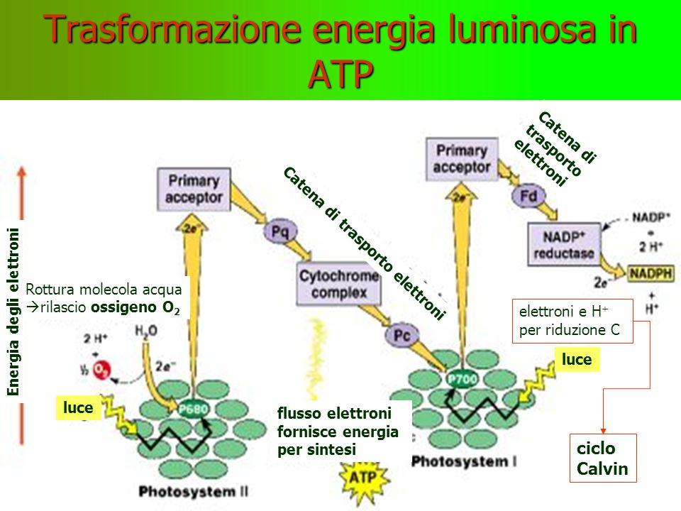Trasformazione energia luminosa in ATP