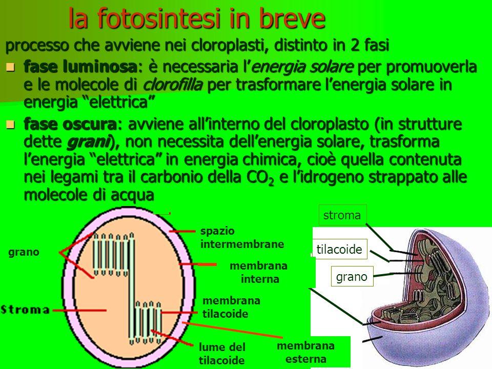 la fotosintesi in breve