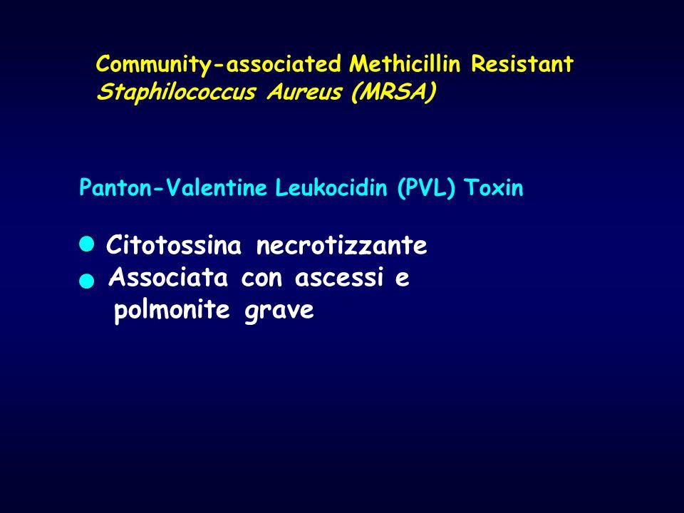 • Citotossina necrotizzante • Associata con ascessi e polmonite grave