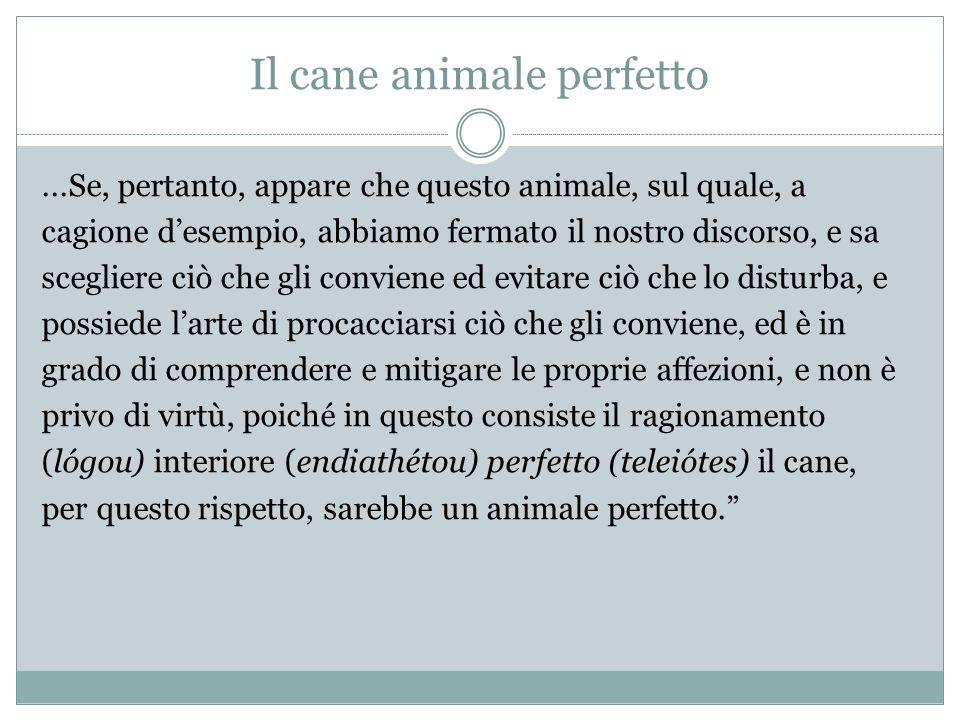 Il cane animale perfetto