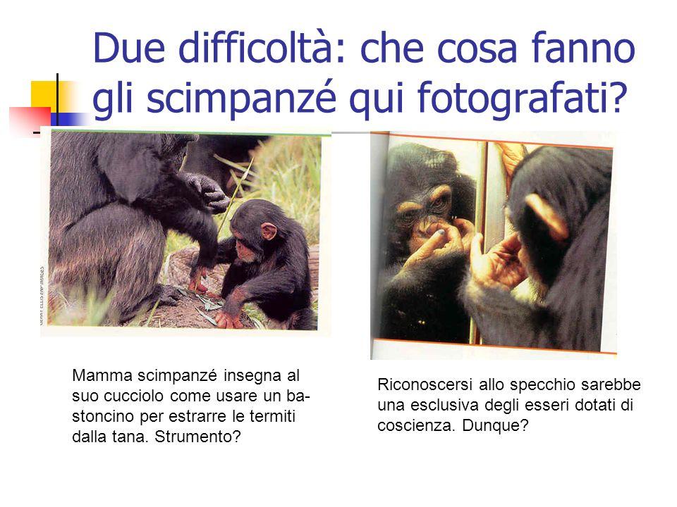 Due difficoltà: che cosa fanno gli scimpanzé qui fotografati