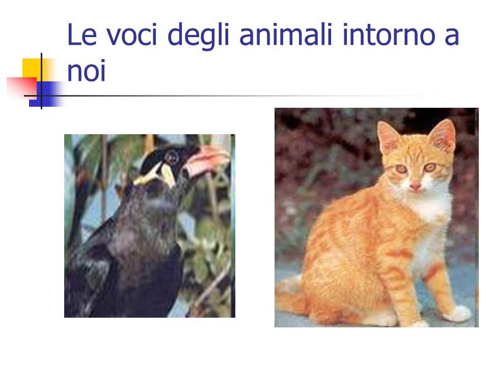 Le voci degli animali intorno a noi