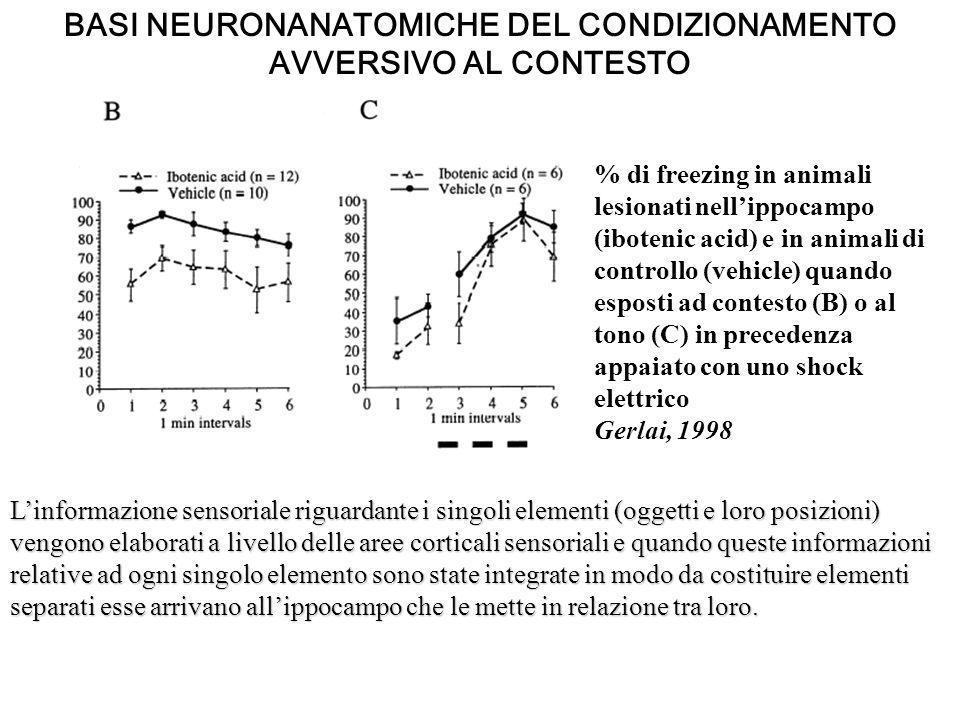 BASI NEURONANATOMICHE DEL CONDIZIONAMENTO AVVERSIVO AL CONTESTO