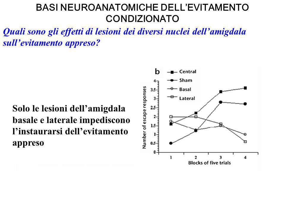 BASI NEUROANATOMICHE DELL'EVITAMENTO CONDIZIONATO