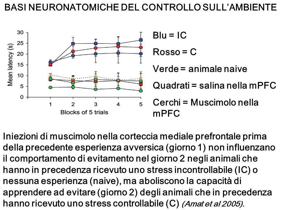 BASI NEURONATOMICHE DEL CONTROLLO SULL'AMBIENTE