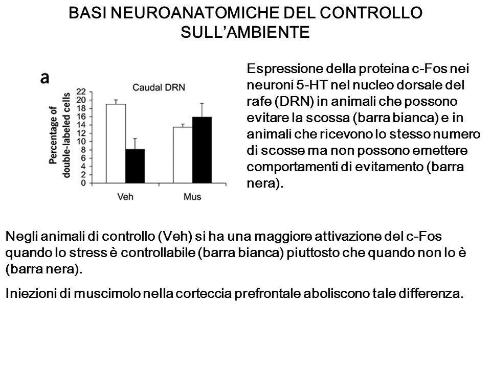 BASI NEUROANATOMICHE DEL CONTROLLO SULL'AMBIENTE