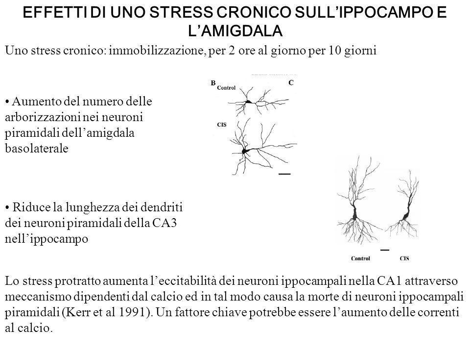EFFETTI DI UNO STRESS CRONICO SULL'IPPOCAMPO E L'AMIGDALA