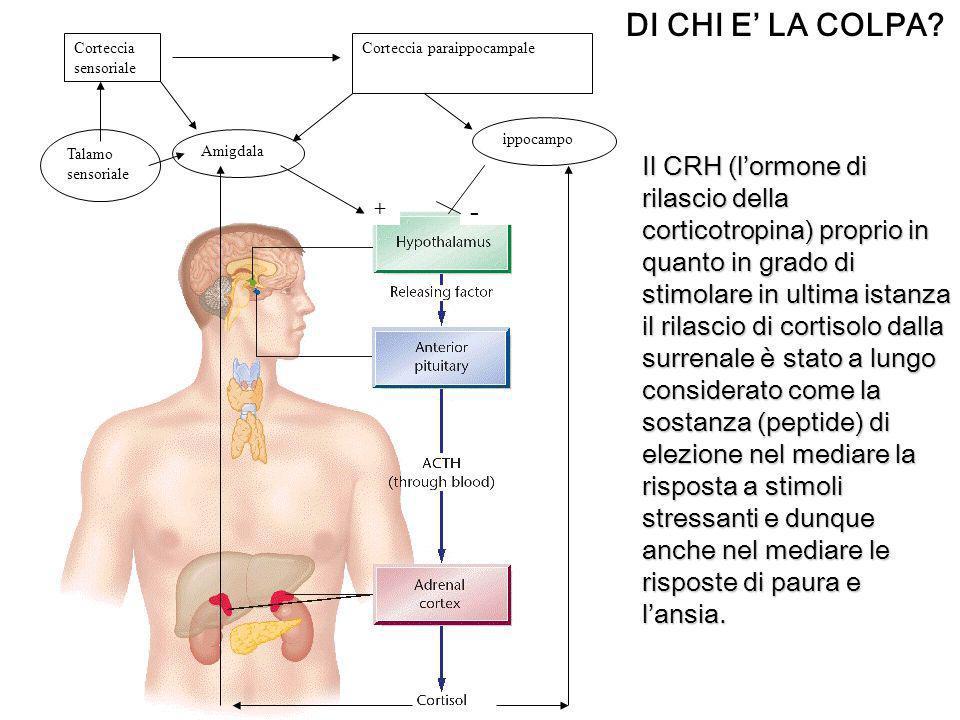 DI CHI E' LA COLPA - + Amigdala. ippocampo. Talamo sensoriale. Corteccia sensoriale. Corteccia paraippocampale.