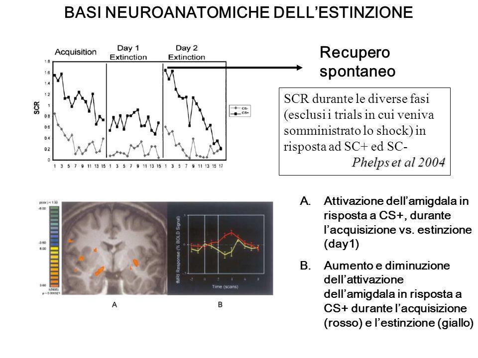 BASI NEUROANATOMICHE DELL'ESTINZIONE
