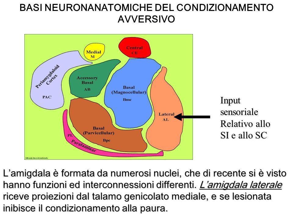 BASI NEURONANATOMICHE DEL CONDIZIONAMENTO AVVERSIVO