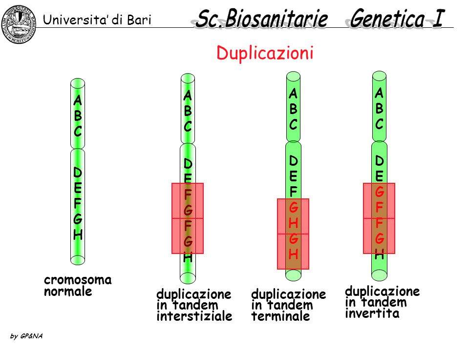 Sc.Biosanitarie Genetica I