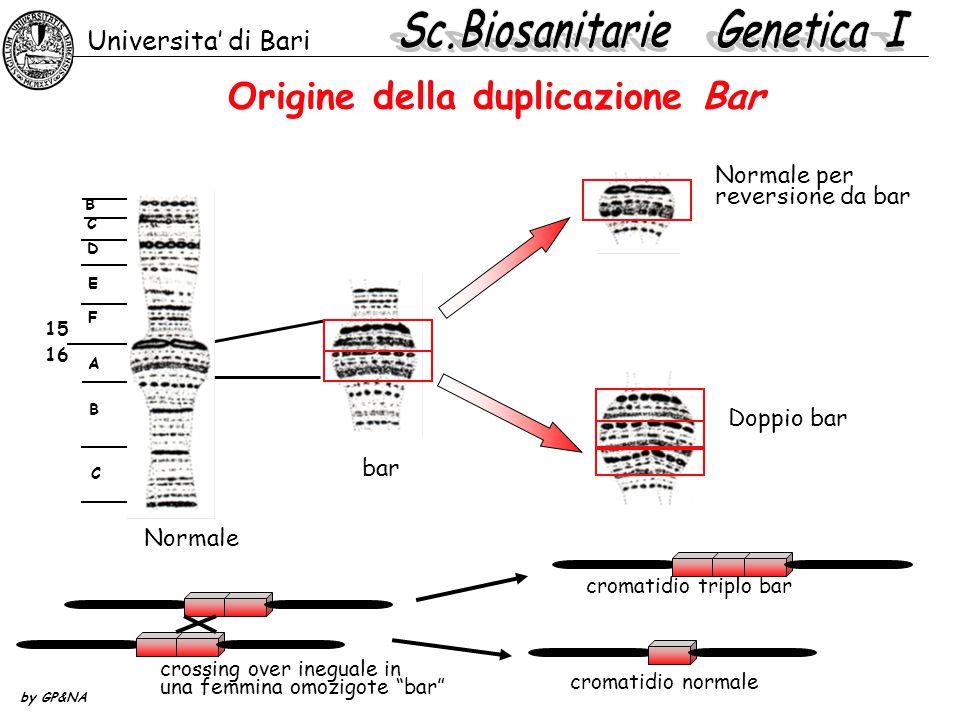 Origine della duplicazione Bar
