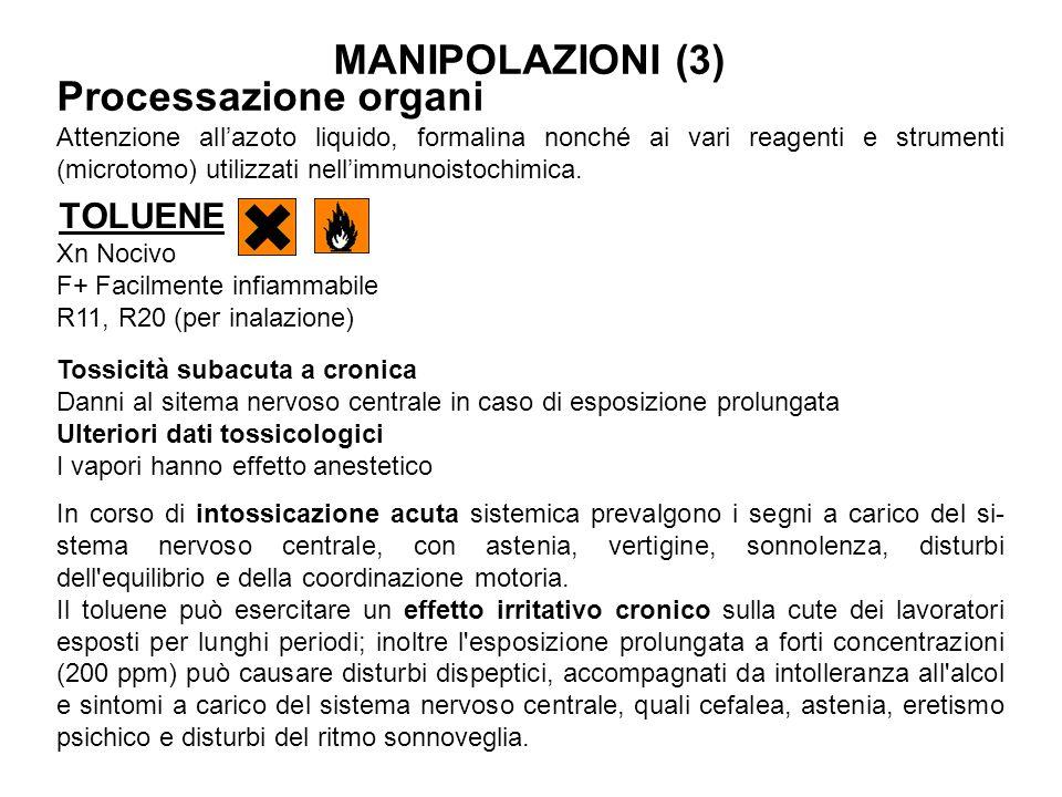 MANIPOLAZIONI (3) Processazione organi TOLUENE