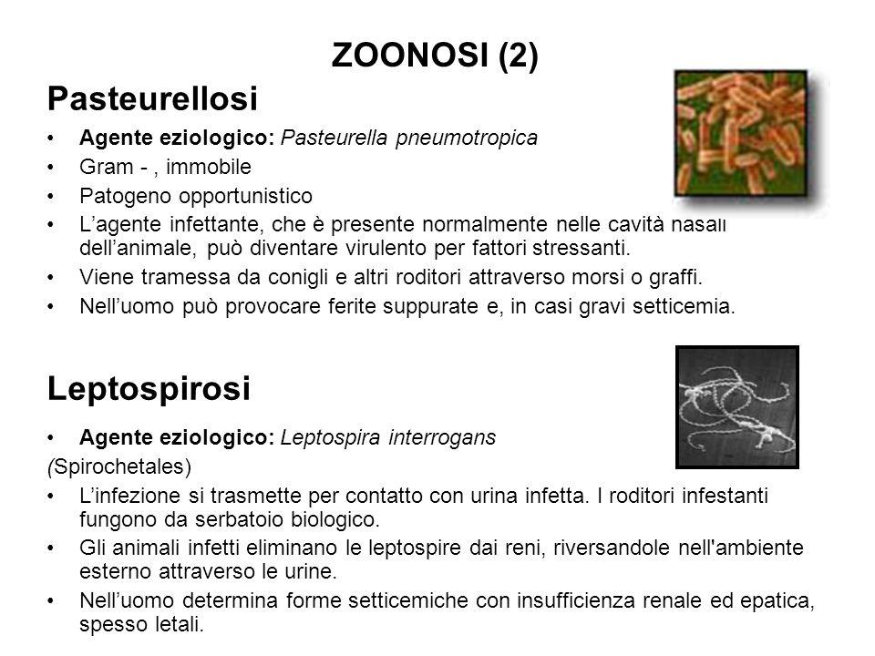 ZOONOSI (2) Pasteurellosi Leptospirosi