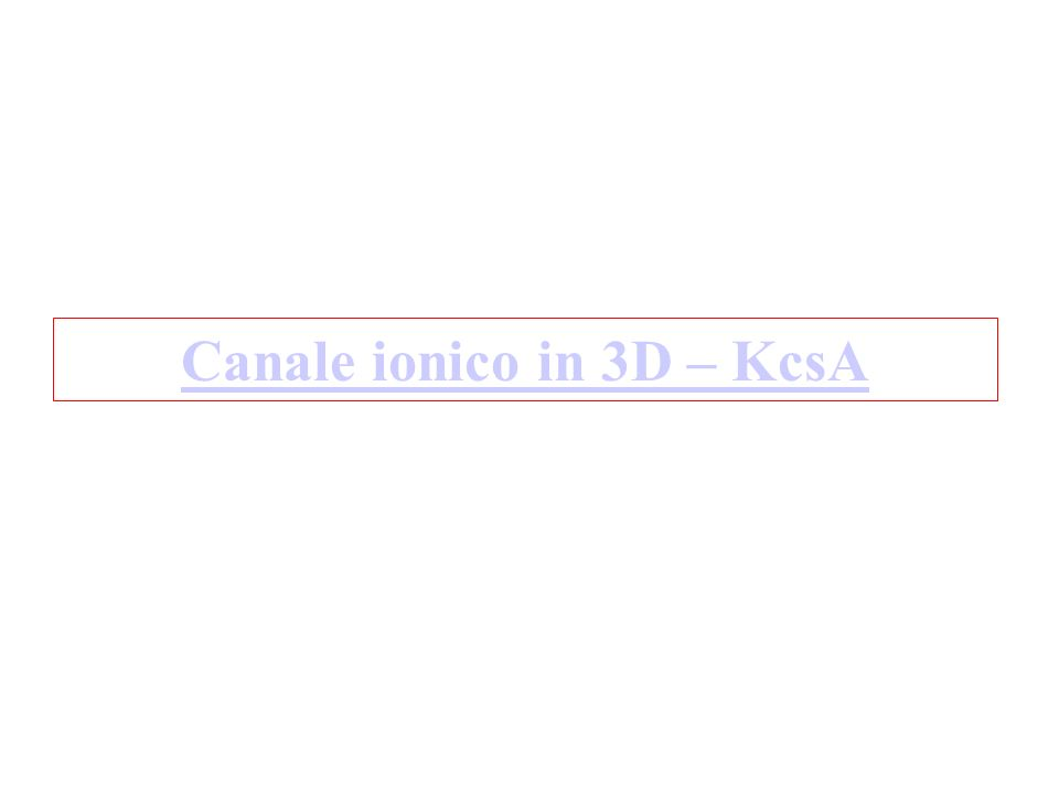 Canale ionico in 3D – KcsA