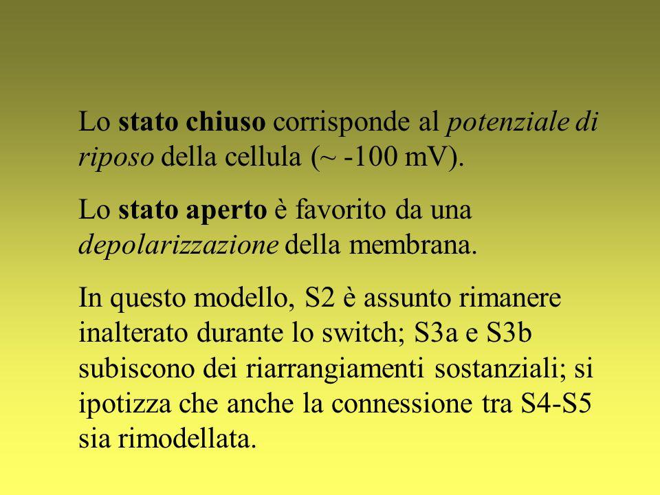Lo stato chiuso corrisponde al potenziale di riposo della cellula (~ -100 mV).