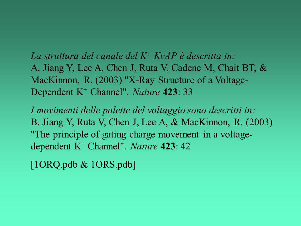 La struttura del canale del K+ KvAP è descritta in: A