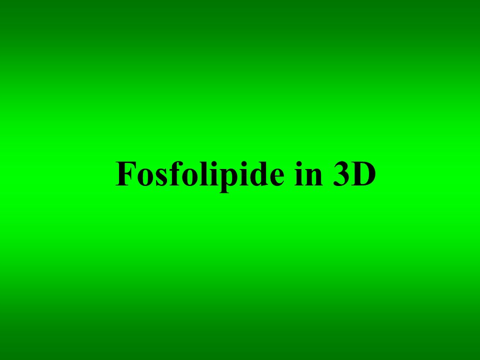 Fosfolipide in 3D