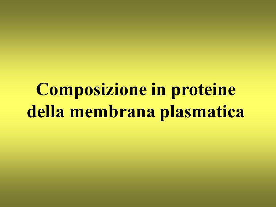 Composizione in proteine della membrana plasmatica