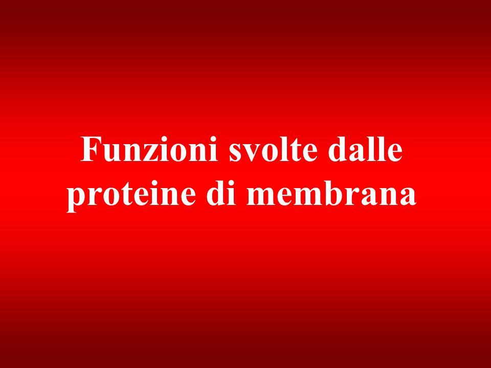 Funzioni svolte dalle proteine di membrana