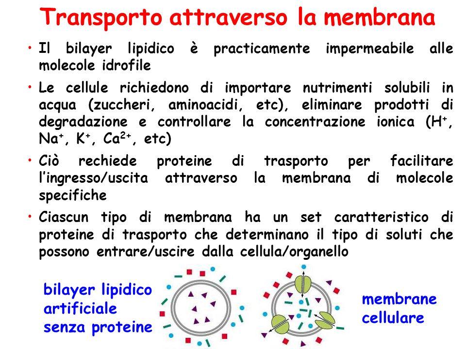 Transporto attraverso la membrana