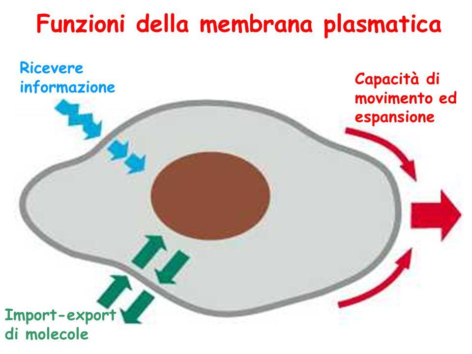 Funzioni della membrana plasmatica