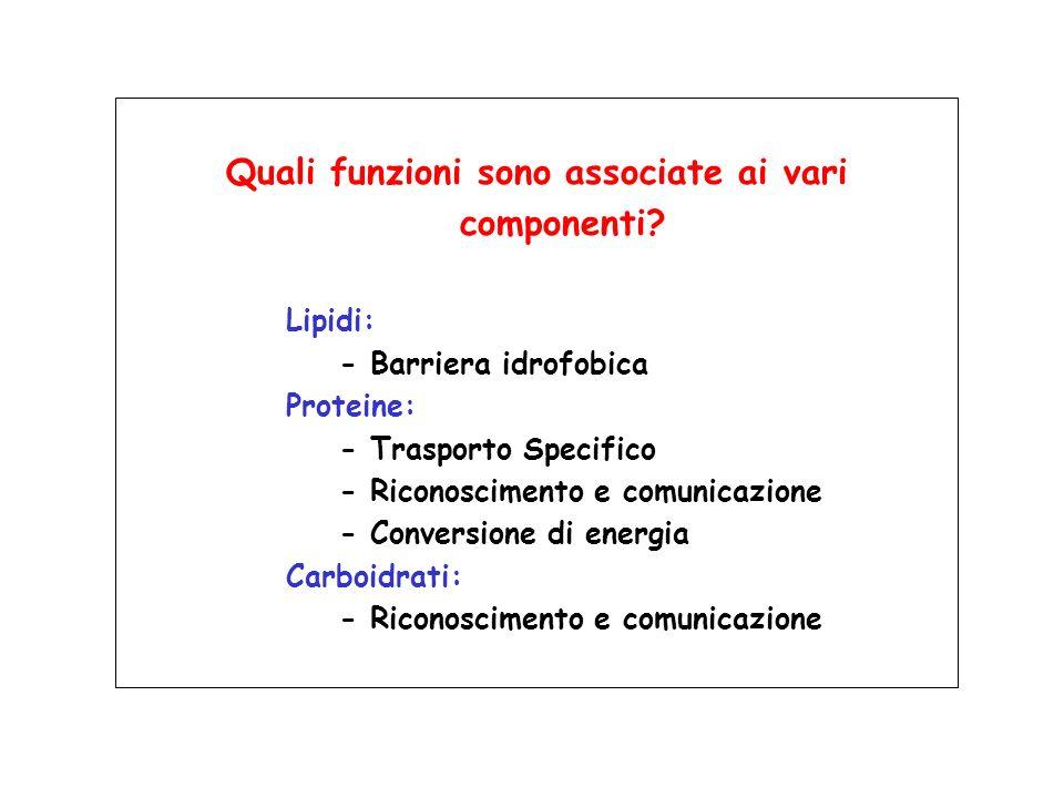 Quali funzioni sono associate ai vari componenti