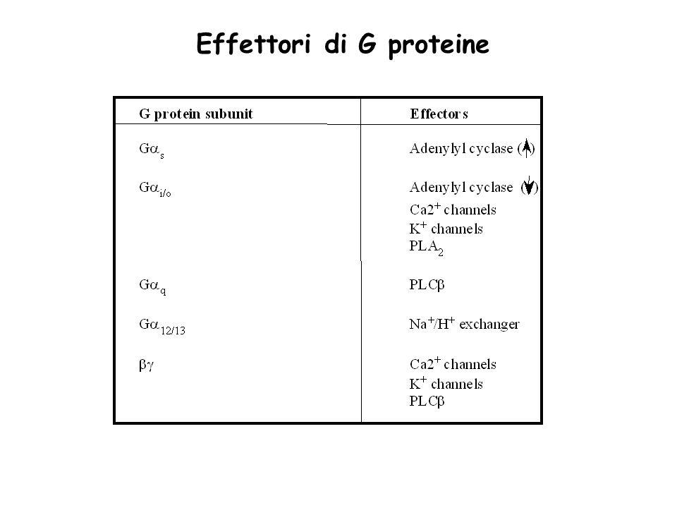 Effettori di G proteine