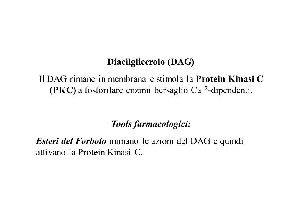 Diacilglicerolo (DAG)