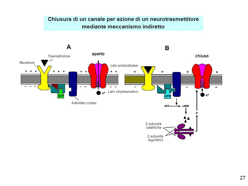 A B Chiusura di un canale per azione di un neurotrasmettitore