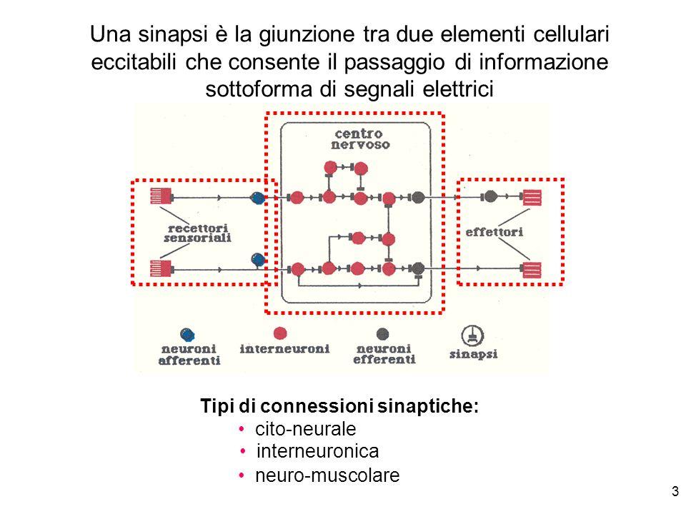 Tipi di connessioni sinaptiche: