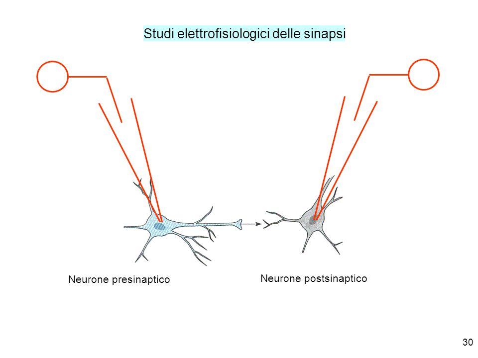 Neurone postsinaptico