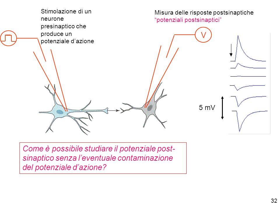 Stimolazione di un neurone presinaptico che produce un potenziale d'azione
