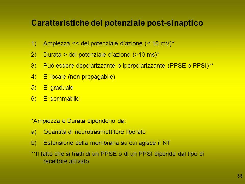 Caratteristiche del potenziale post-sinaptico