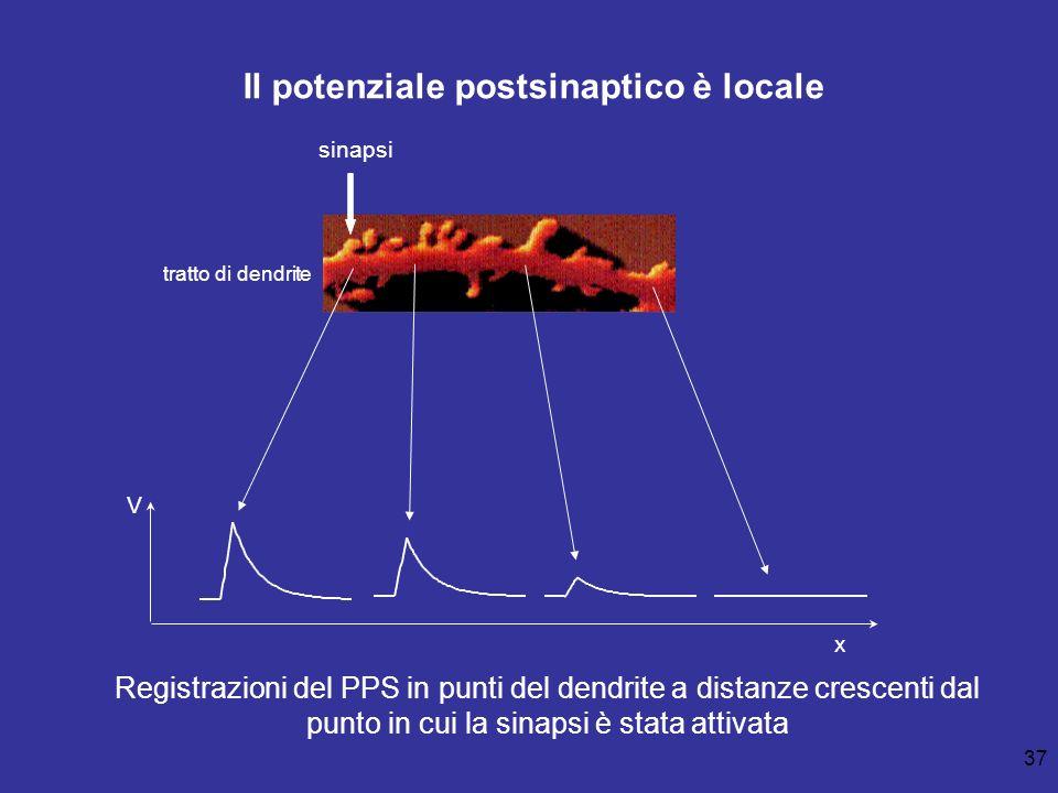 Il potenziale postsinaptico è locale