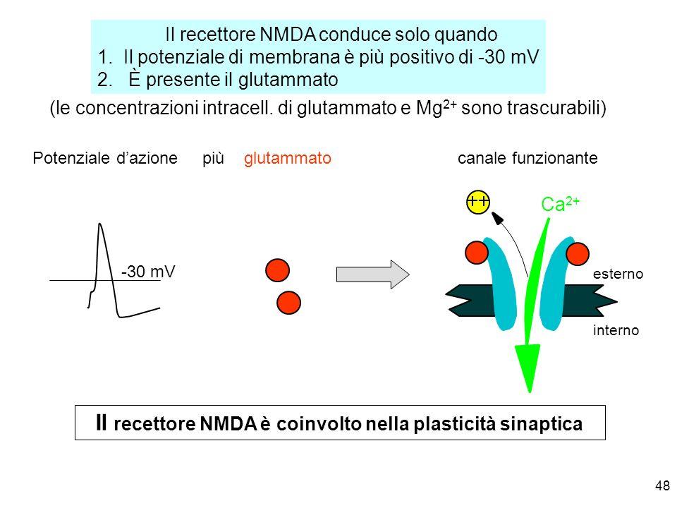 Il recettore NMDA è coinvolto nella plasticità sinaptica