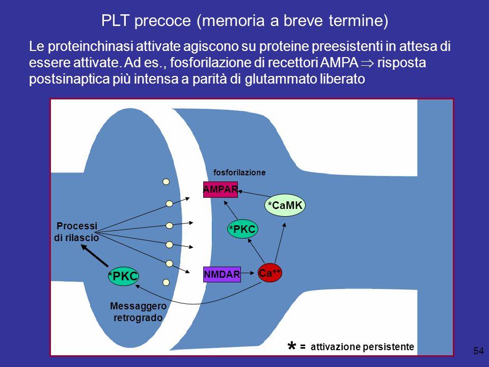 PLT precoce (memoria a breve termine)
