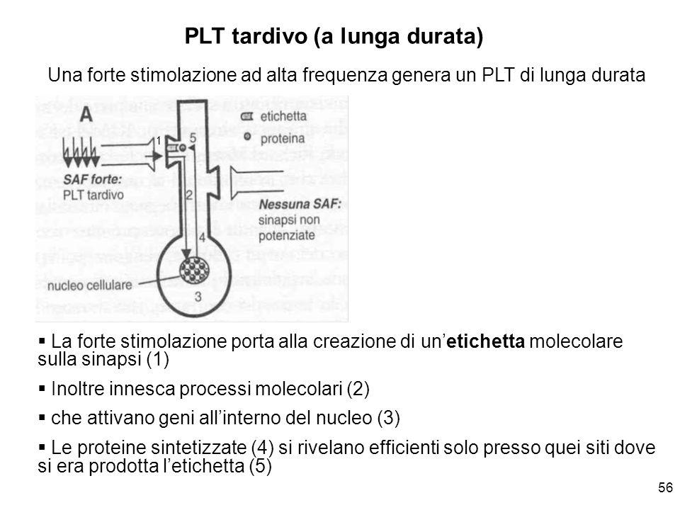 PLT tardivo (a lunga durata)