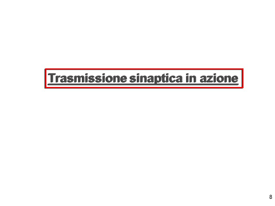 Trasmissione sinaptica in azione