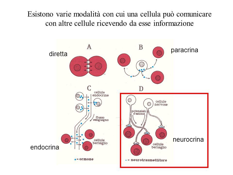 Esistono varie modalità con cui una cellula può comunicare con altre cellule ricevendo da esse informazione