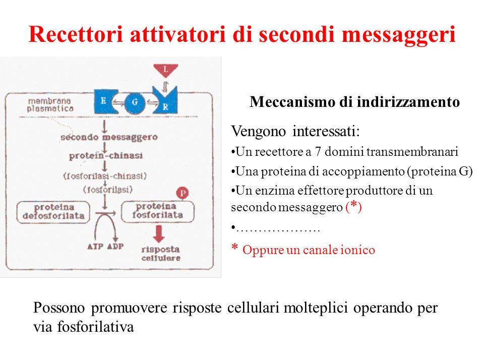 Recettori attivatori di secondi messaggeri