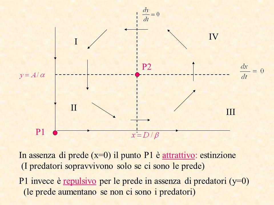 IV I. P2. II. III. P1. In assenza di prede (x=0) il punto P1 è attrattivo: estinzione. (I predatori sopravvivono solo se ci sono le prede)