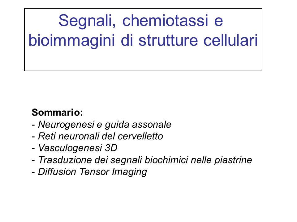 bioimmagini di strutture cellulari