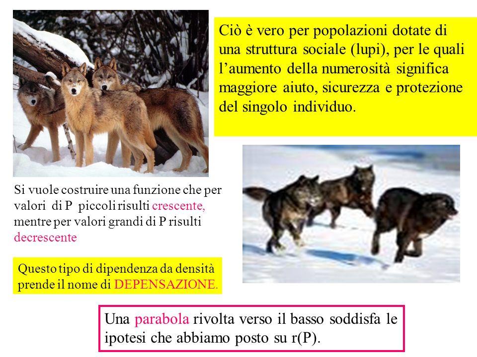 Ciò è vero per popolazioni dotate di una struttura sociale (lupi), per le quali l'aumento della numerosità significa maggiore aiuto, sicurezza e protezione del singolo individuo.