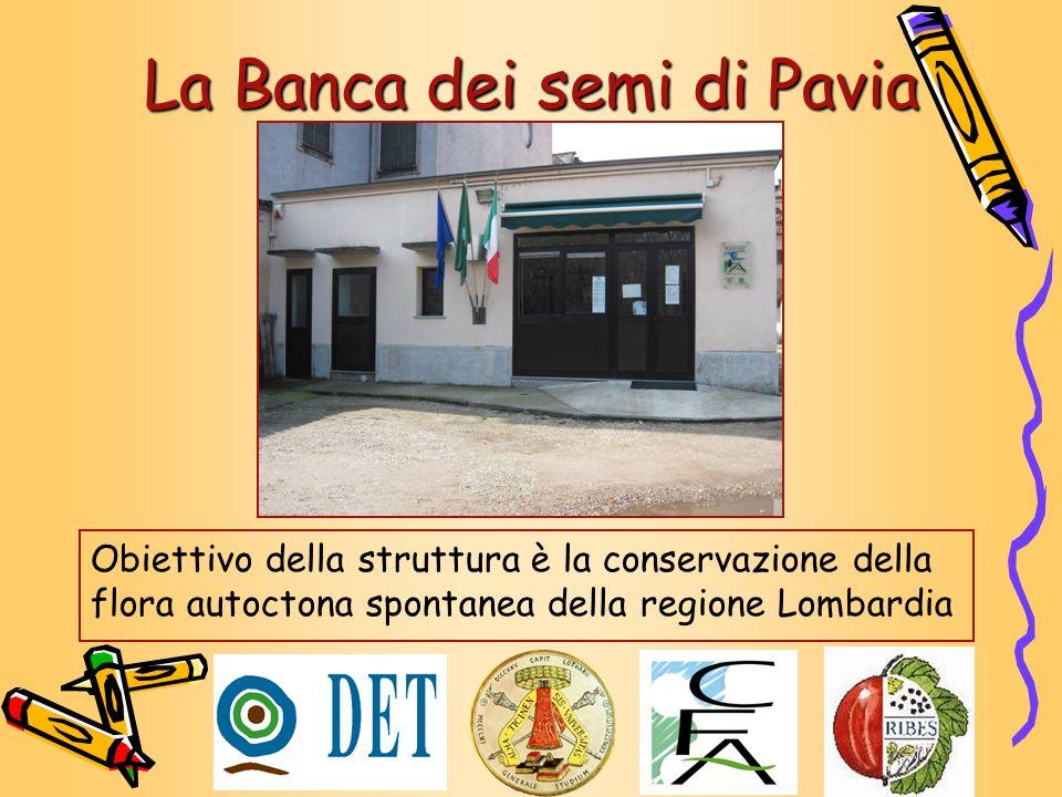 La Banca dei semi di Pavia