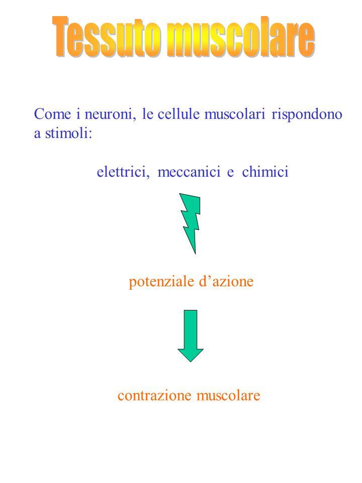 elettrici, meccanici e chimici