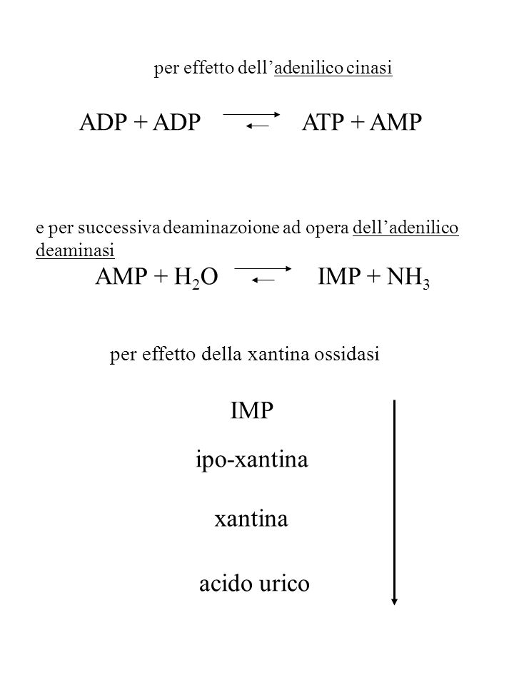 ADP + ADP ATP + AMP AMP + H2O IMP + NH3 IMP ipo-xantina xantina