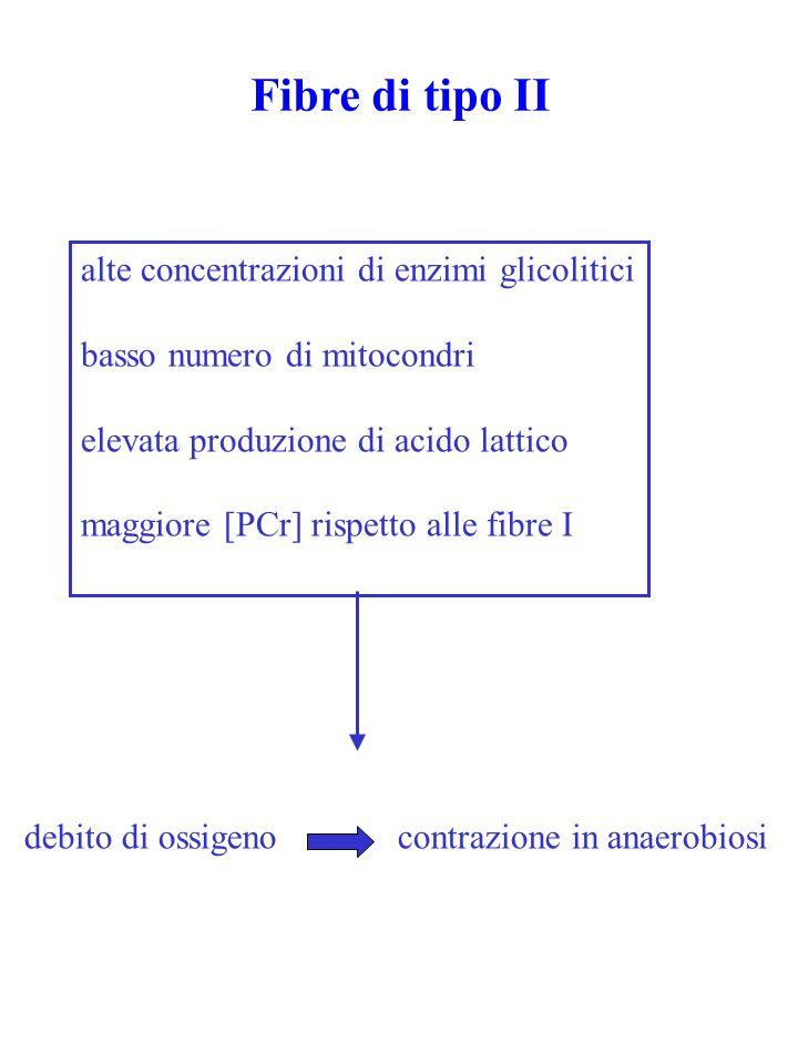 debito di ossigeno contrazione in anaerobiosi