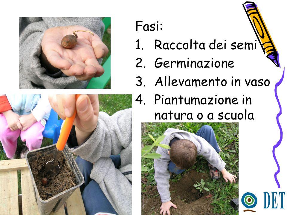 Fasi: Raccolta dei semi Germinazione Allevamento in vaso Piantumazione in natura o a scuola