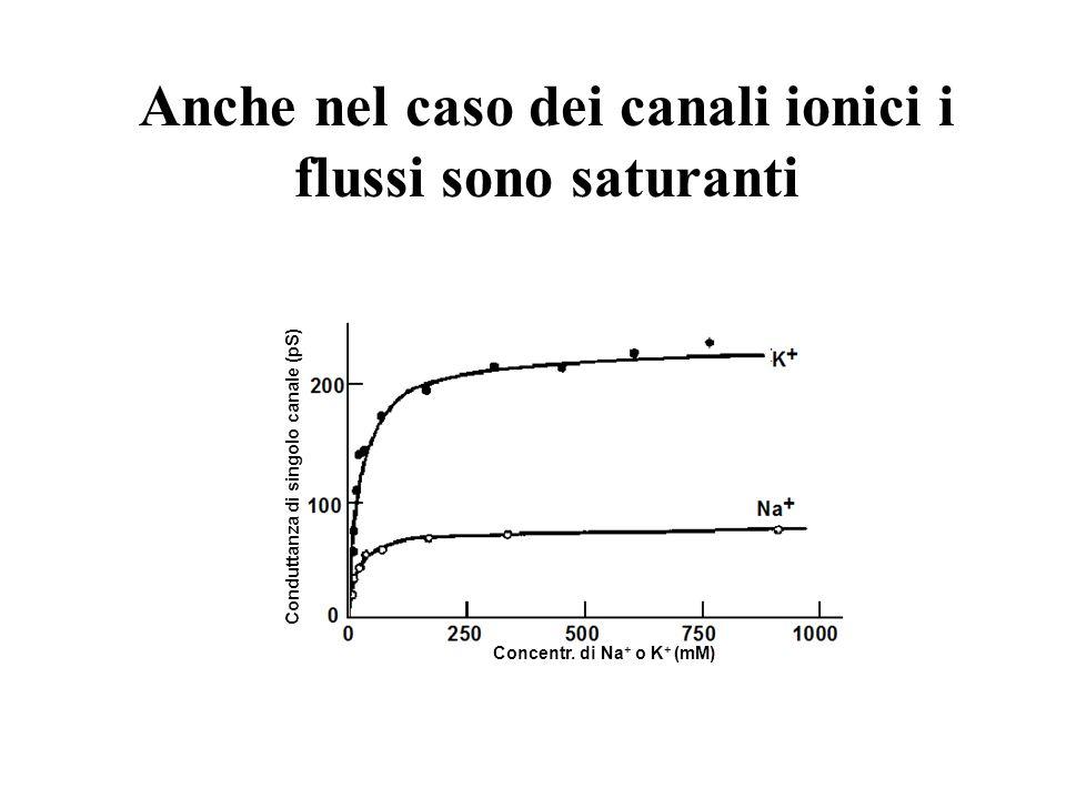 Anche nel caso dei canali ionici i flussi sono saturanti